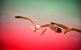 Бесплатные фото чайки,белые,полет,крылья,перья,черные,птицы