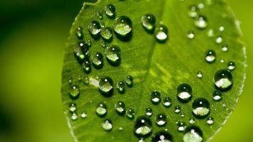 Фото бесплатно капли, листок, отражение