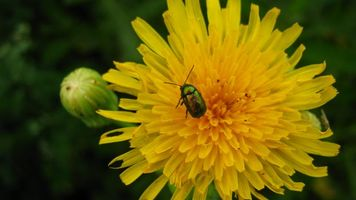 Бесплатные фото цветок, природа, лето, цветы