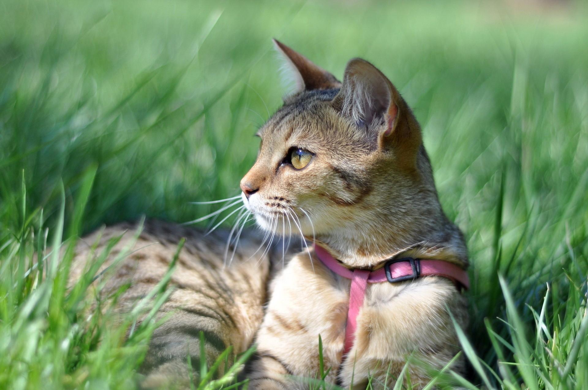 Кот возле забора на траве бесплатно