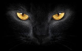 Заставки кот, черный, взгляд