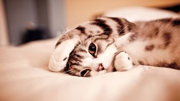 Бесплатные фото кот,отдых,кровать,лапки,голова,глаза,кошки