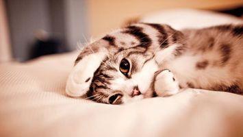 Заставки кот, отдых, кровать