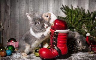 Заставки кролик, ботинок, елка, шарики, украшения, шерсть, уши, животные