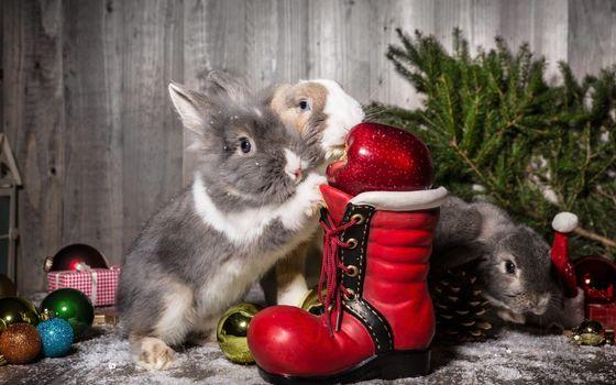 Photo free rabbit, shoe, Christmas tree