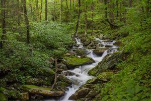 Фото бесплатно лес, речка, деревья