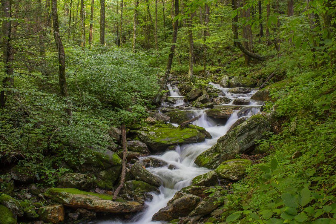 Фото бесплатно лес, речка, деревья, камни, природа, природа, природа