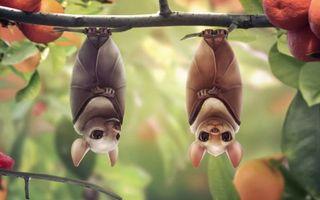 Фото бесплатно летучие, мыши, ветка