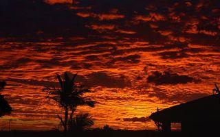 Бесплатные фото небо,облака,тучи,закат,красный,цвет,пальмы