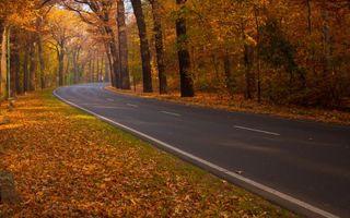 Фото бесплатно осень, дорога, разметка, деревья, листва, лес, природа