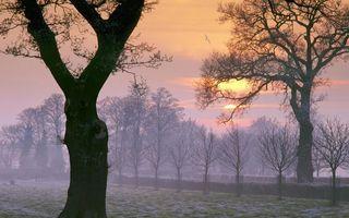 Фото бесплатно парк, деревья, листья, кора, ветки, крона, чайка, полет, крылья, солнце, закат, туман, природа, пейзажи