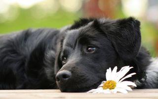 Заставки пес, окрас, черный