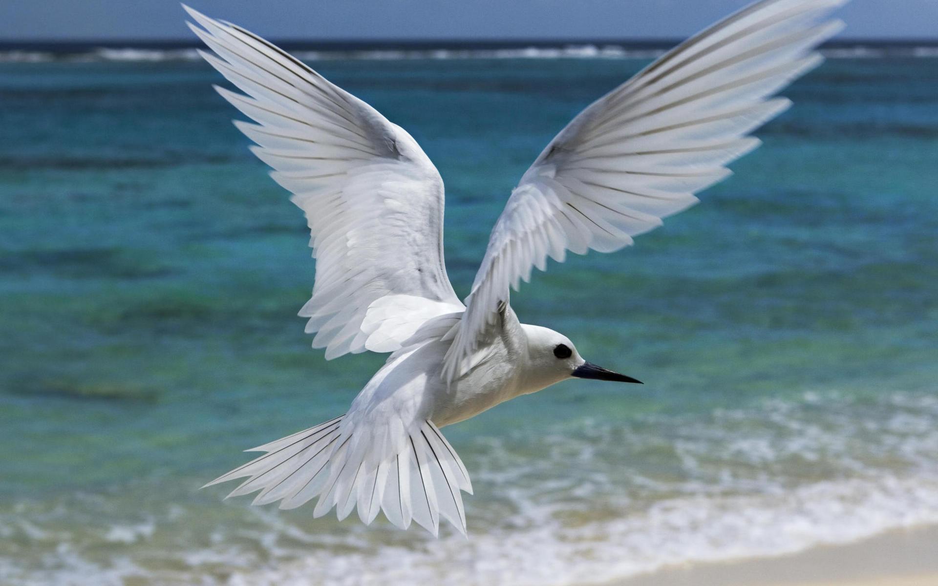 птица, белая, полет