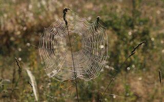 Фото бесплатно трава, паутина, узор