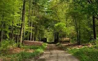Фото бесплатно тропинка, дорога, лес