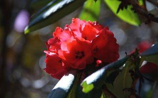 Фото бесплатно бутон, дерево, цветы