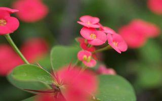 Фото бесплатно цветок, розовый, маленький, лепестки, тычинка, стебель, листья, зеленые, цветы