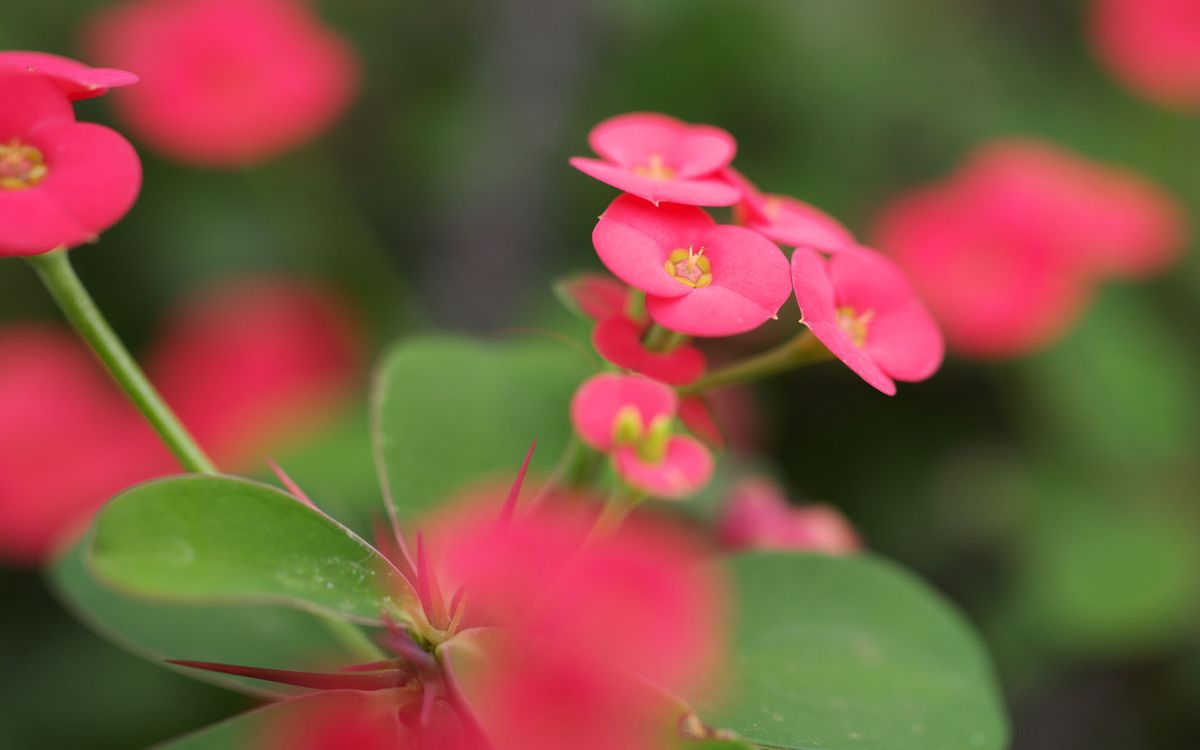 Free photo flower, pink, small - to desktop