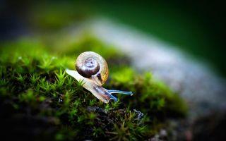 Бесплатные фото улитка,ракушка,домик,рожки,глаза,трава,мох