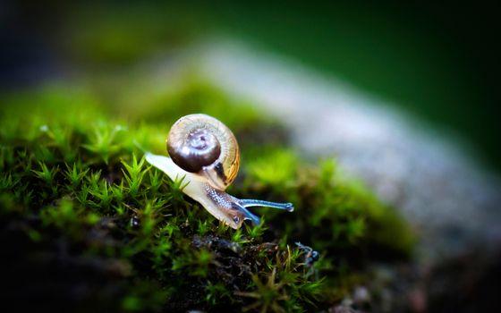 Photo free snail, shell, house