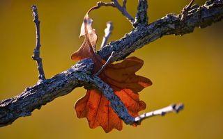 Фото бесплатно ветка, листья, осень, листопад, кора, коряга, фон, зеленый, парк, лес, природа