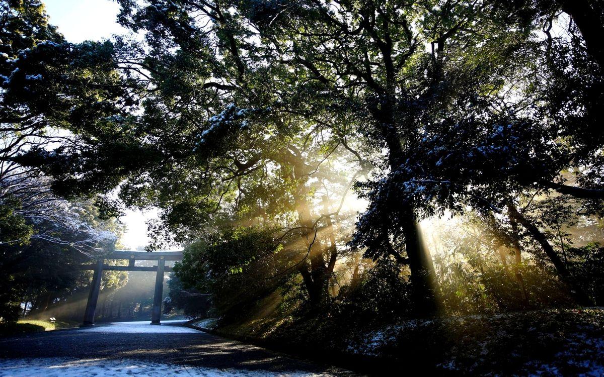 Фото бесплатно зима, утро, восход, солнца, деревья, ветки, лучи - на рабочий стол