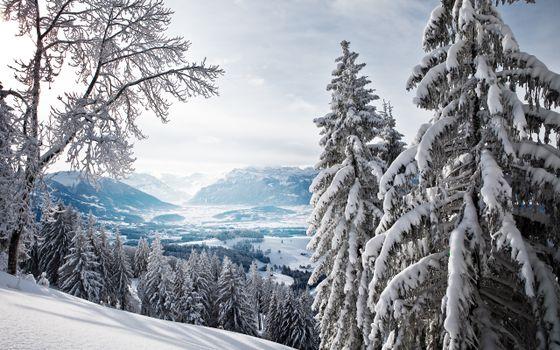 Бесплатные фото зимняя долина,горы,снег,елки,в снегу,склон,пейзажи,природа