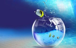 Бесплатные фото аквариум, рыбка, вода, плеск, брызги, водоросли, синий
