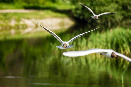 Фото бесплатно чайки, птицы, лето