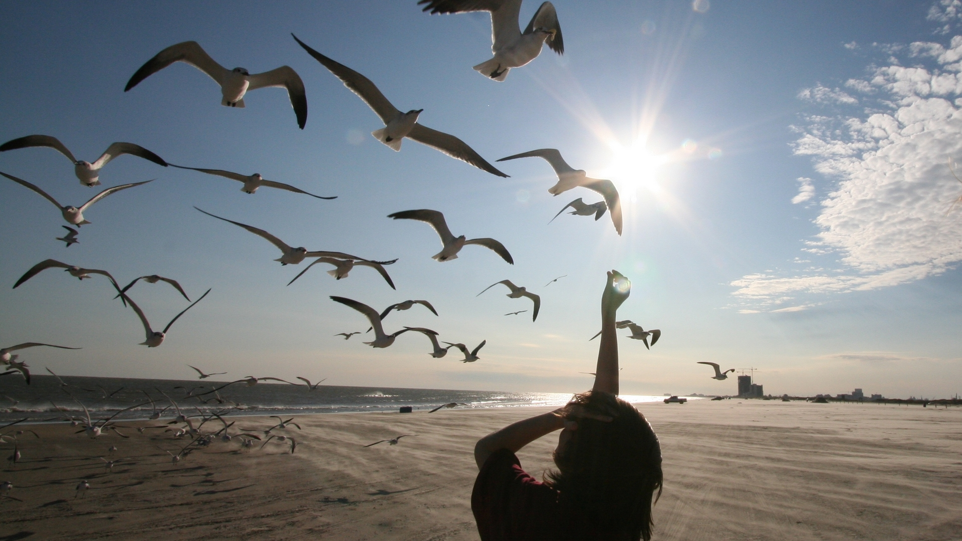 чайки, берег, море