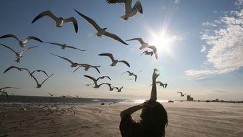 Заставки чайки, берег, море, солнце, девушка, корм, рука, настроения