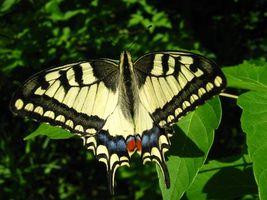 Фото бесплатно лето, насекомые, цветы