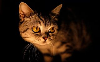 Фото бесплатно кошки, лицо, темнота