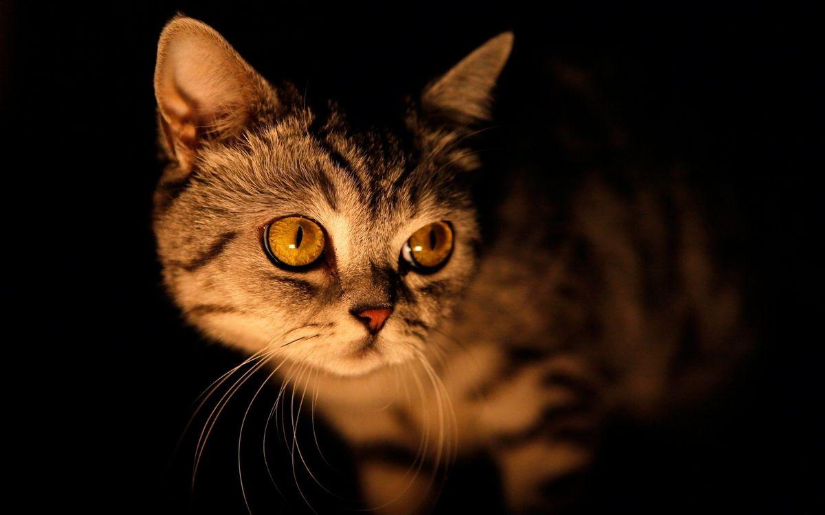 Фото бесплатно кошка, морда, глаза, желтые, усы, шерсть, темнота, свет, кошки, кошки