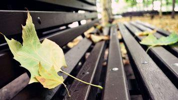 Бесплатные фото парк,лавочка,скамейка,листья,опавшие,разное