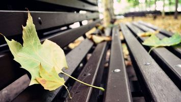 Photo free bench, fallen, leaves