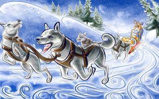 Фото бесплатно пес, ошейник, елки