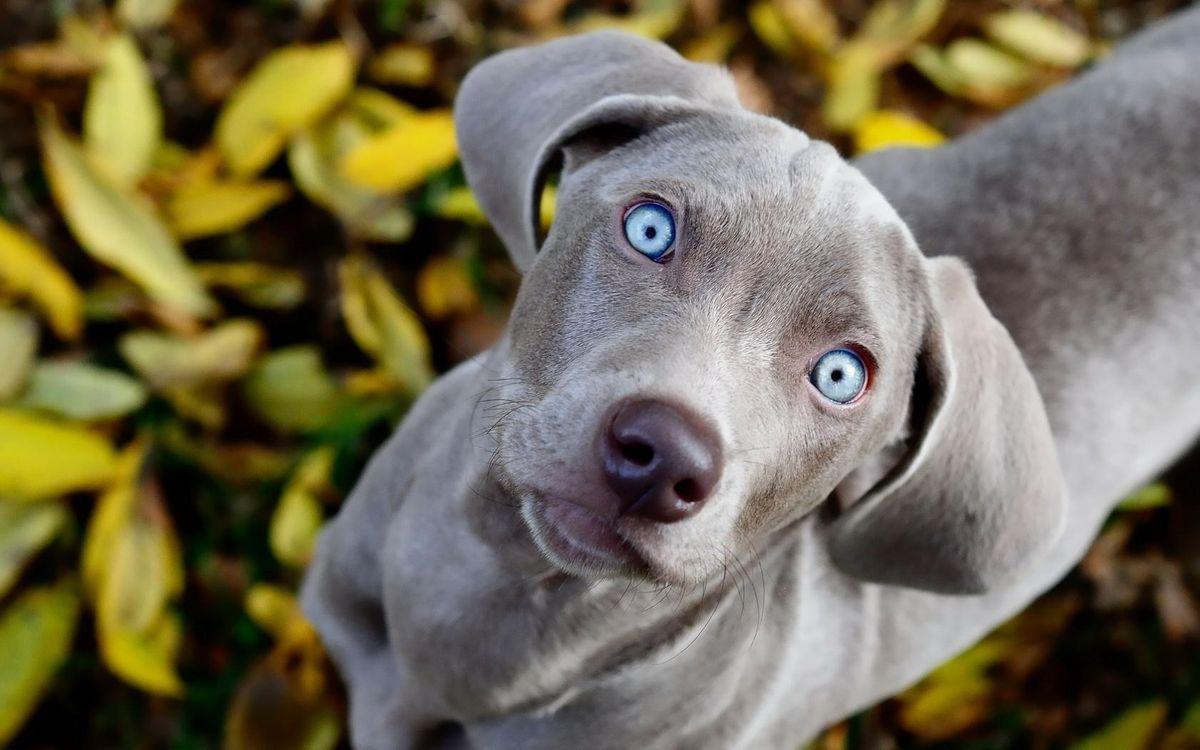 Обои пес, щенок, голубые картинки на телефон