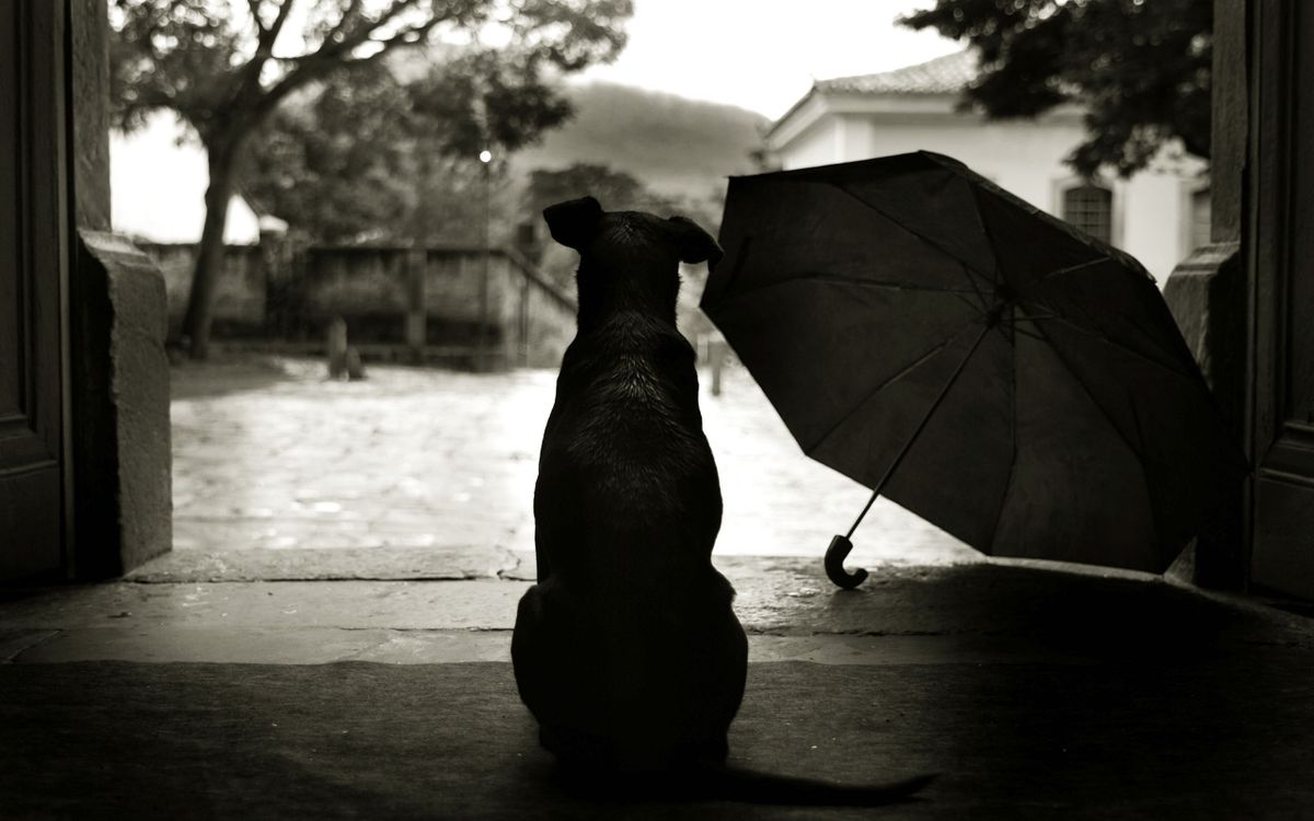 Фото бесплатно пес, зонтик, помещение, ворота, улица, грусть, ситуации, ситуации