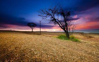 Бесплатные фото поле,салома,деревья,дорога,столб,небо,пейзажи