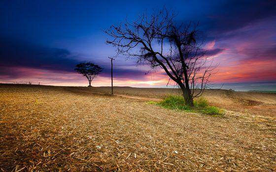Photo free field, salom, trees