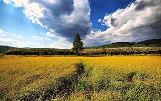 Бесплатные фото поле,трава,дерево,осень