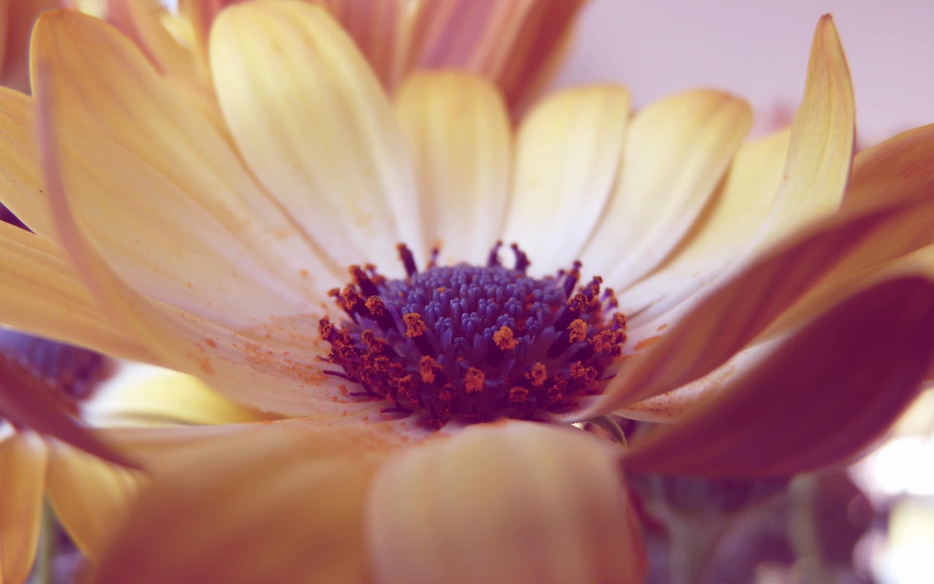 цветок, лепестки, листья