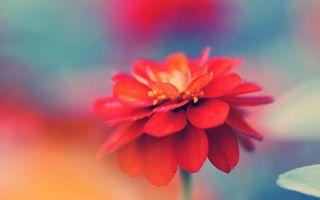 Photo free macro, red, fragrance