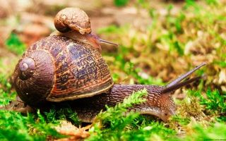 Photo free snail, big, small