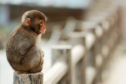 Фото бесплатно обезьяна, сидит, макака