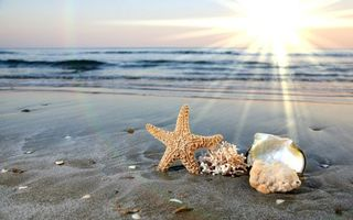Фото бесплатно вода, ракушки, волны
