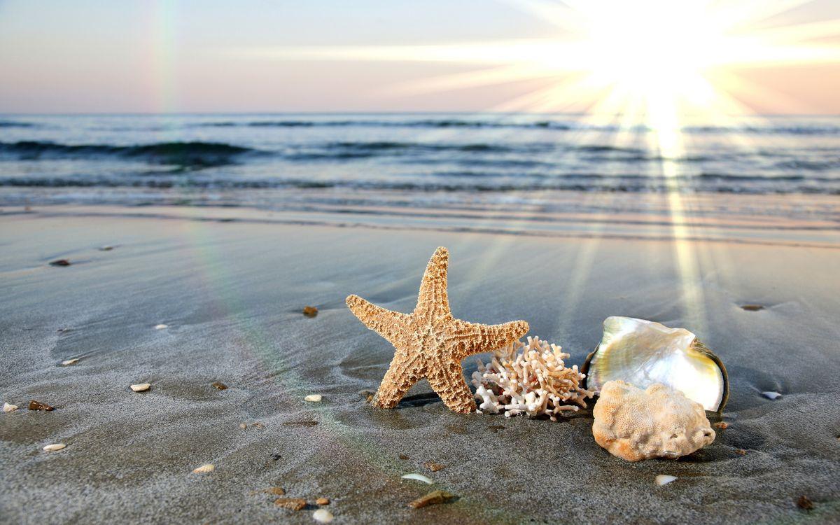 Фото бесплатно вода, ракушки, волны, океан, море, морская звезда, песок, разное