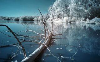 Заставки зимнее озеро, дерево, лед