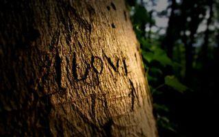 Обои дерево, кора, вырезка, слова, i love, я люблю, настроения, разное